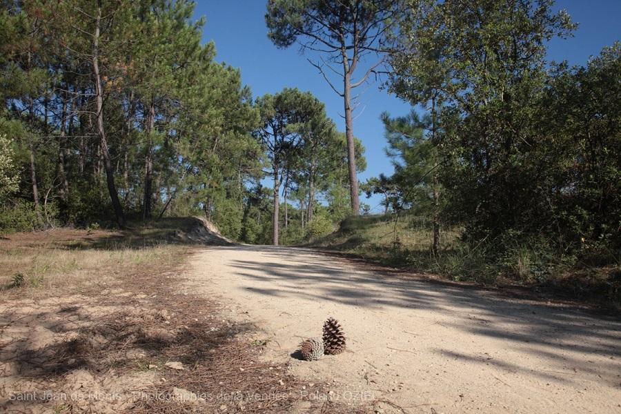 foret-pinede-saint-jean-de-monts-IMG_6139